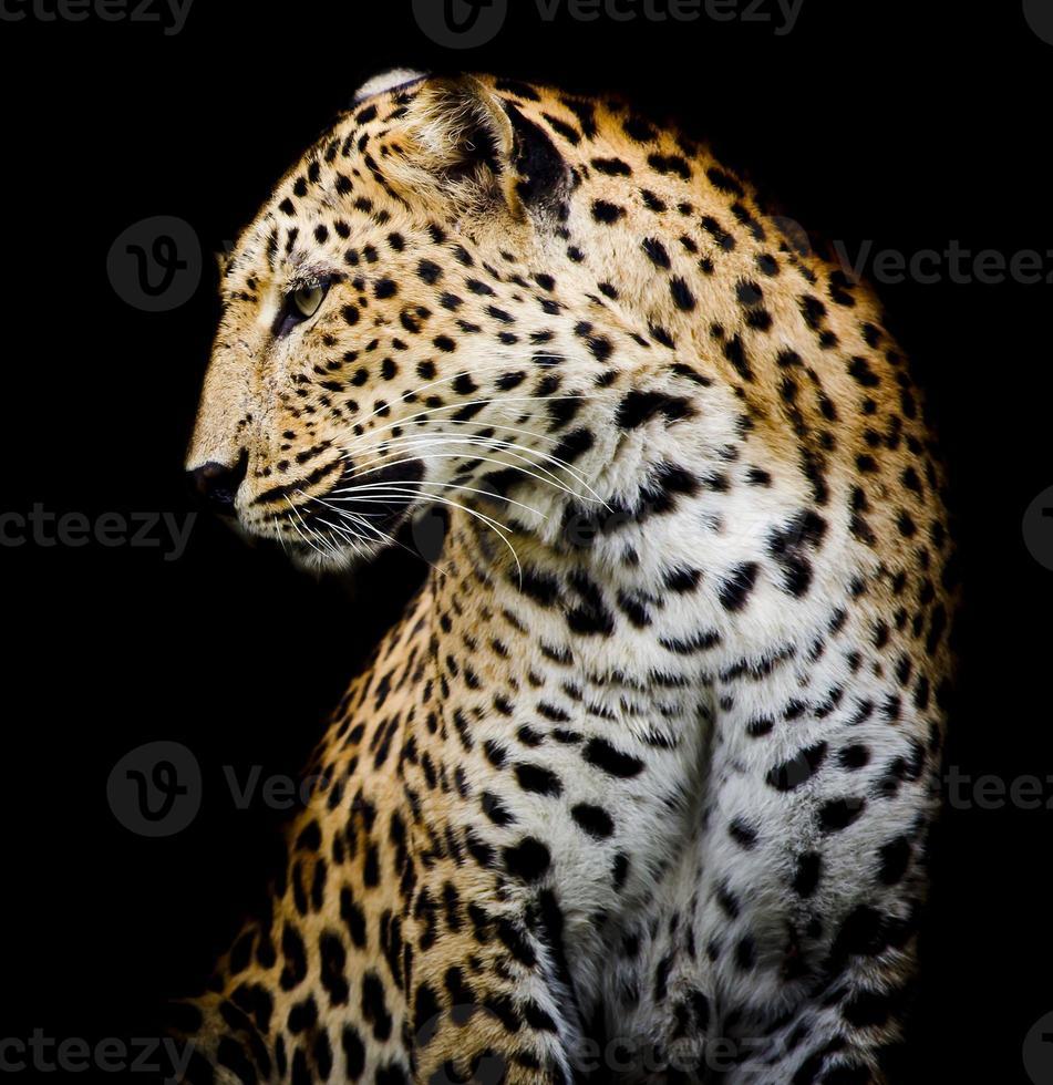 lato del leopardo foto