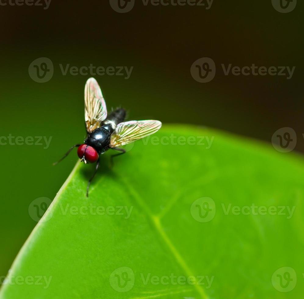 volare su una foglia verde. foto