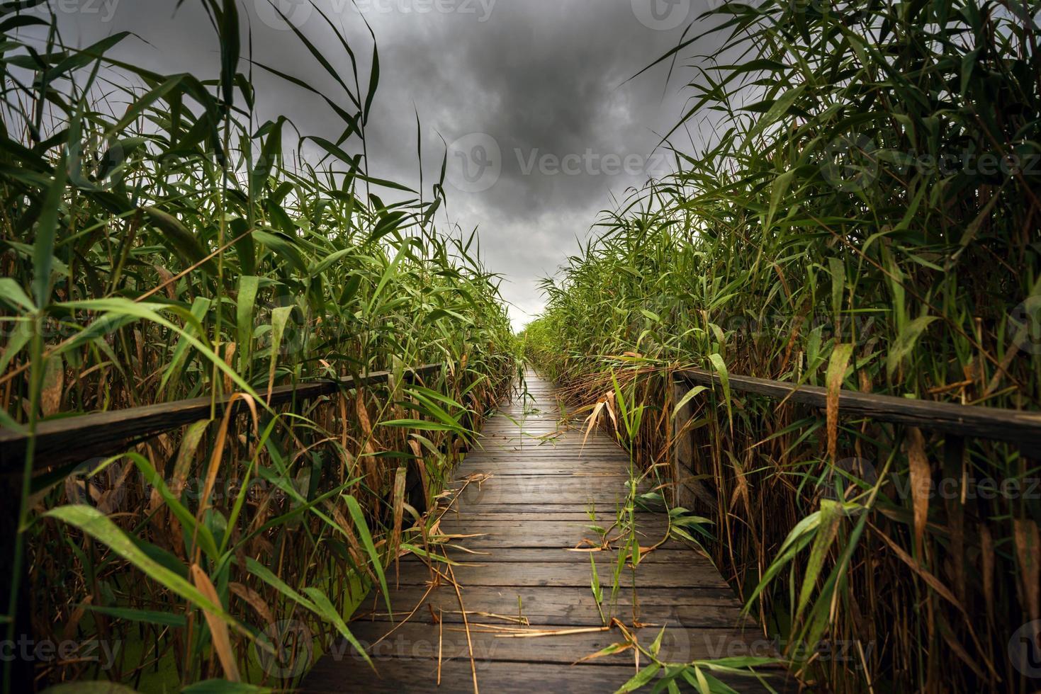 percorso di legno attraverso la canna foto