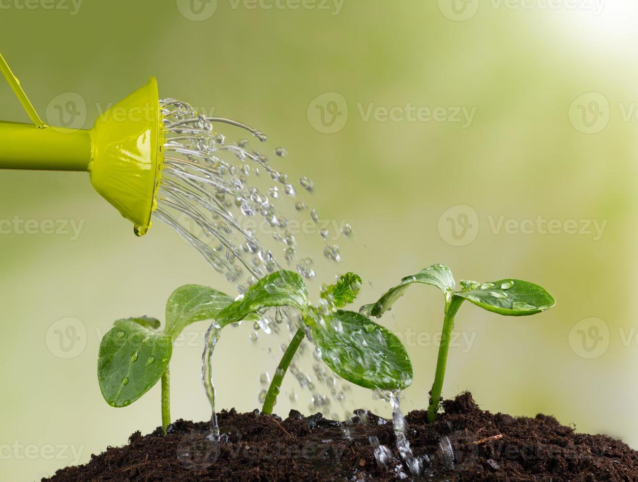 annaffiatoio innaffiando le giovani piante foto
