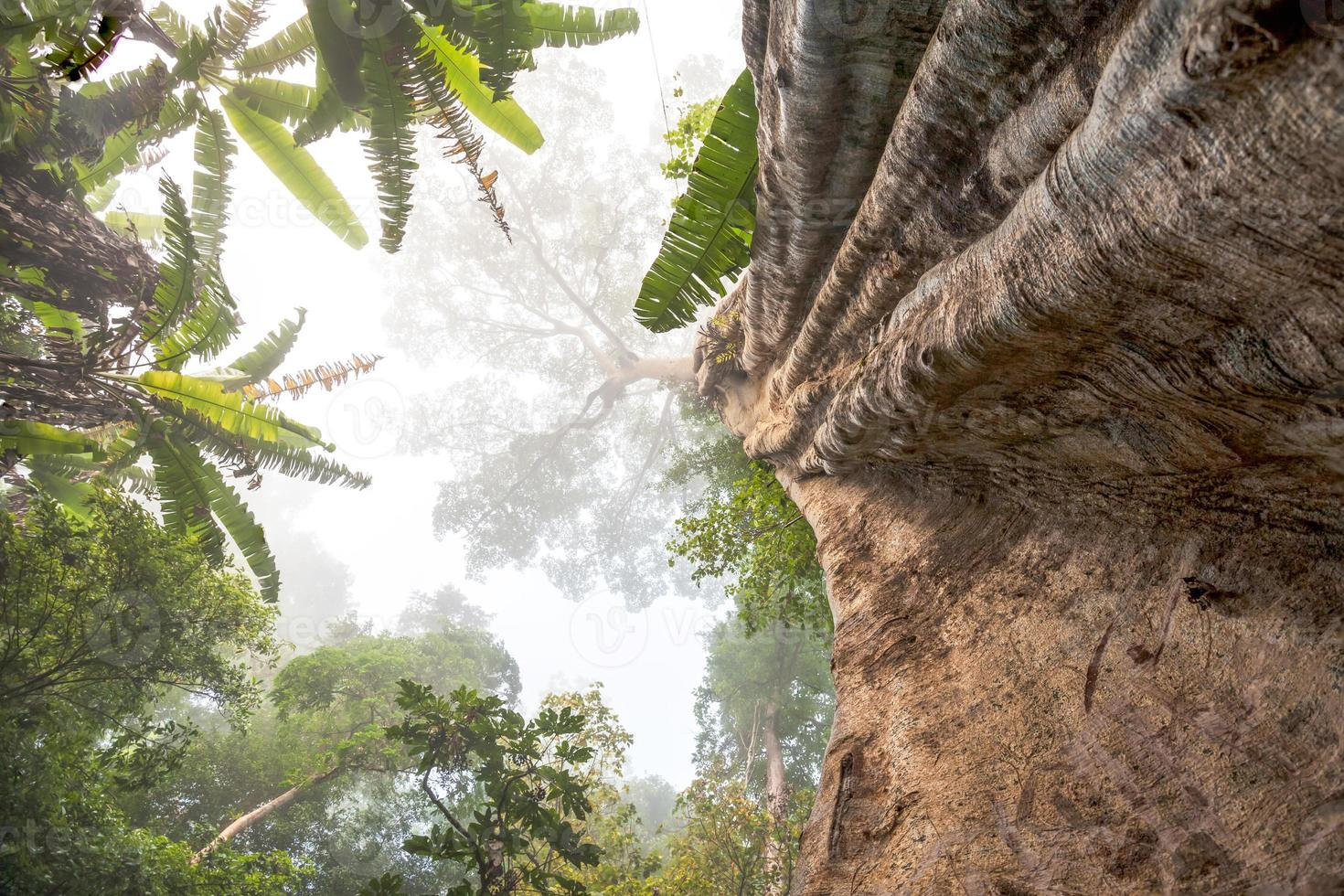 grande albero foto