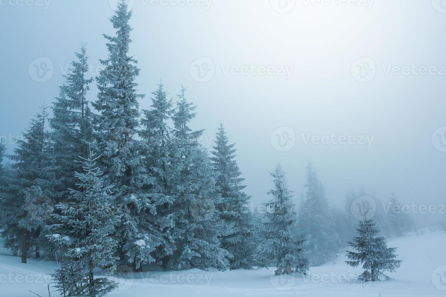 foresta nebbiosa invernale foto