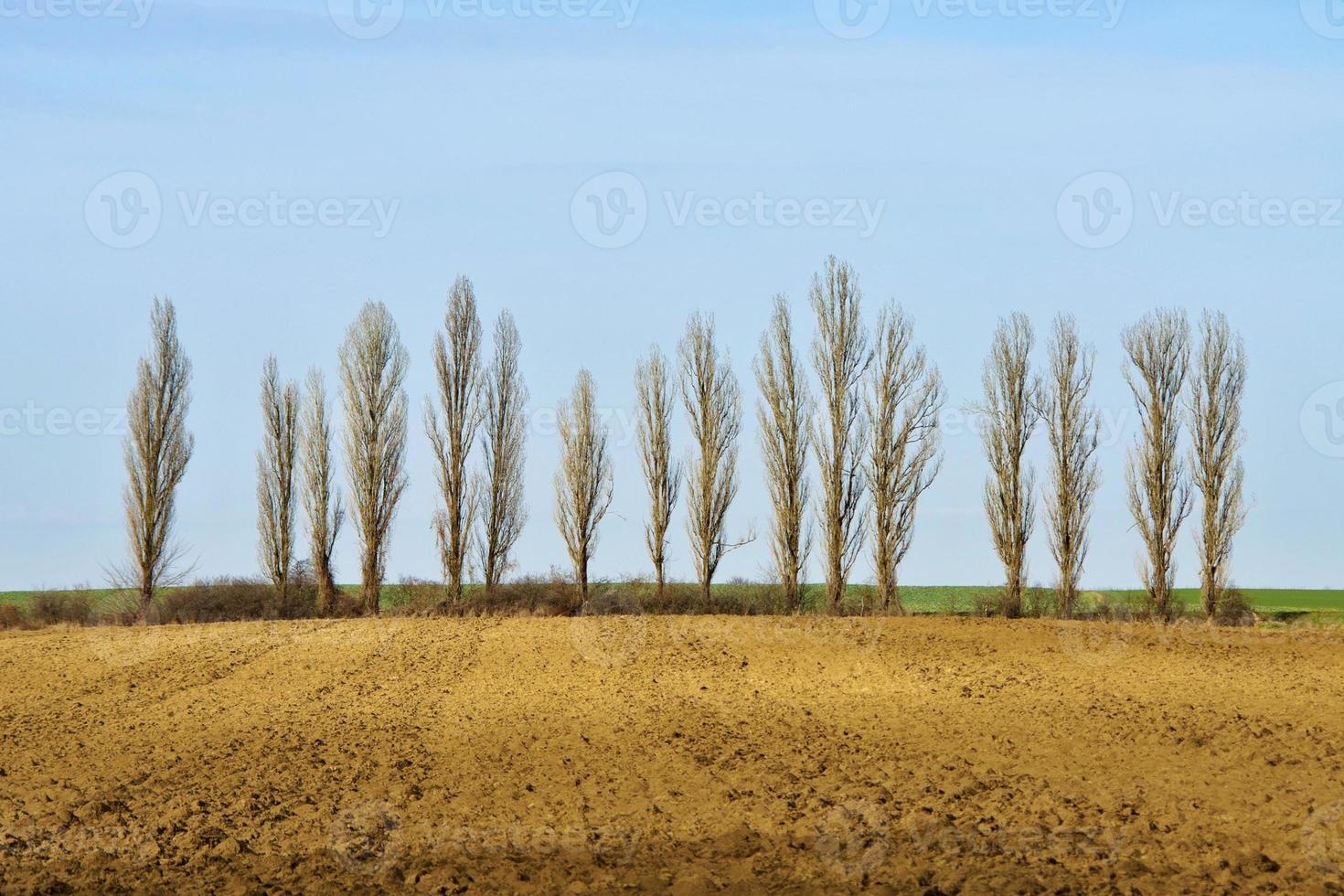 fila di alberi spogli vicino al campo foto