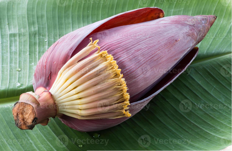 fiore di banana foto