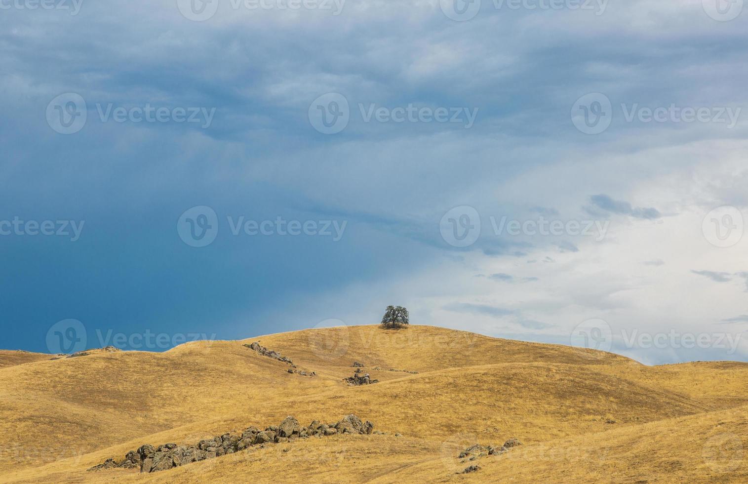 un albero in colline dorate foto