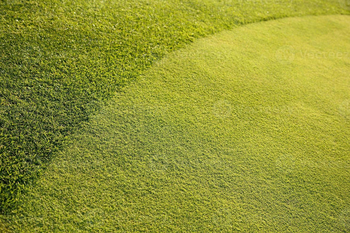 fondo dell'erba verde xxl foto