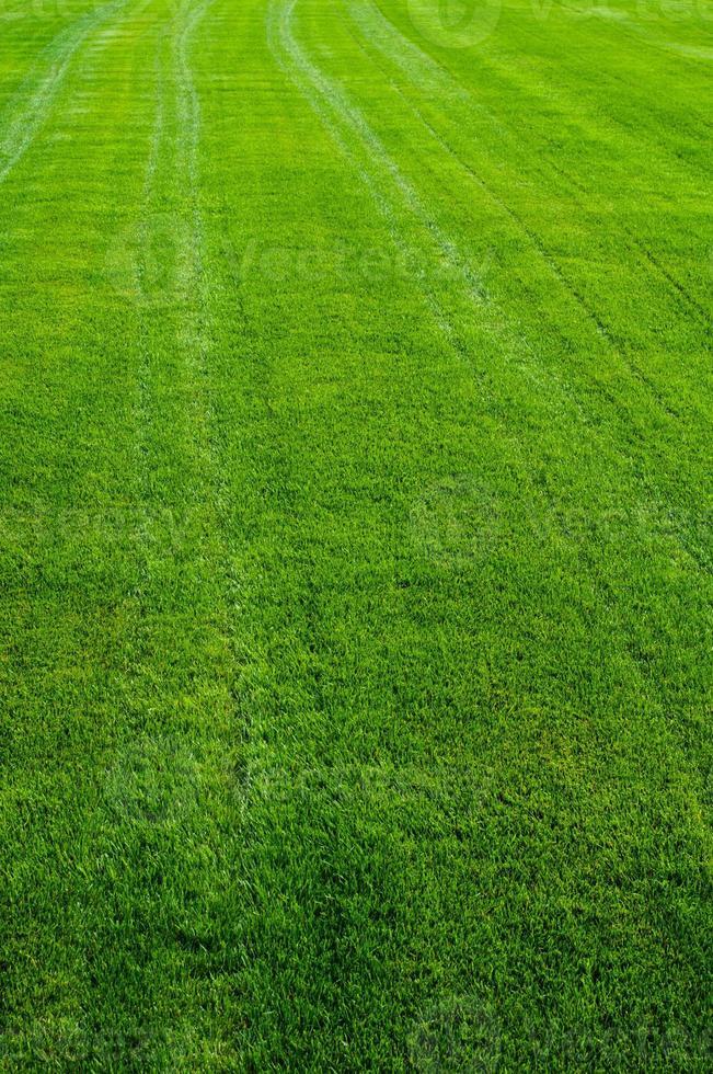 trama di erba verde foto