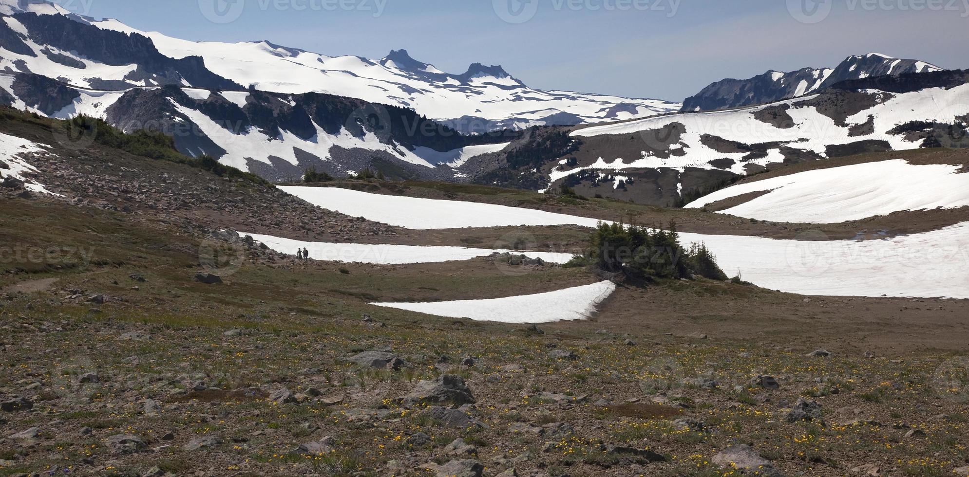 escursioni a piedi monte Rainier alba giallo fiori di campo campi di neve foto