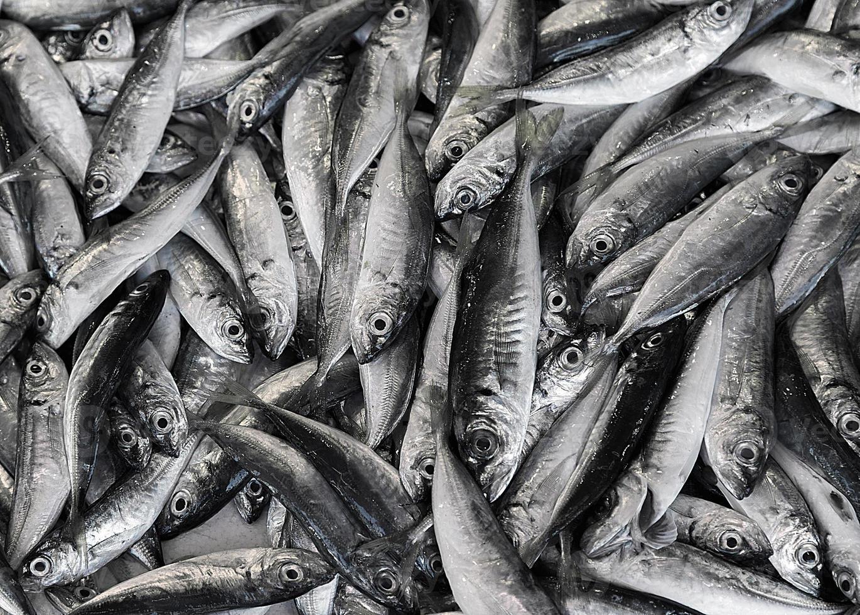 sfondo di pesce foto