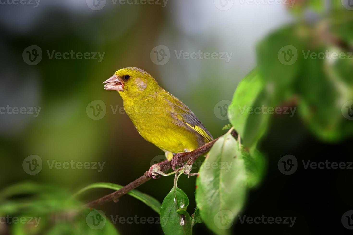 uccello impegnato foto