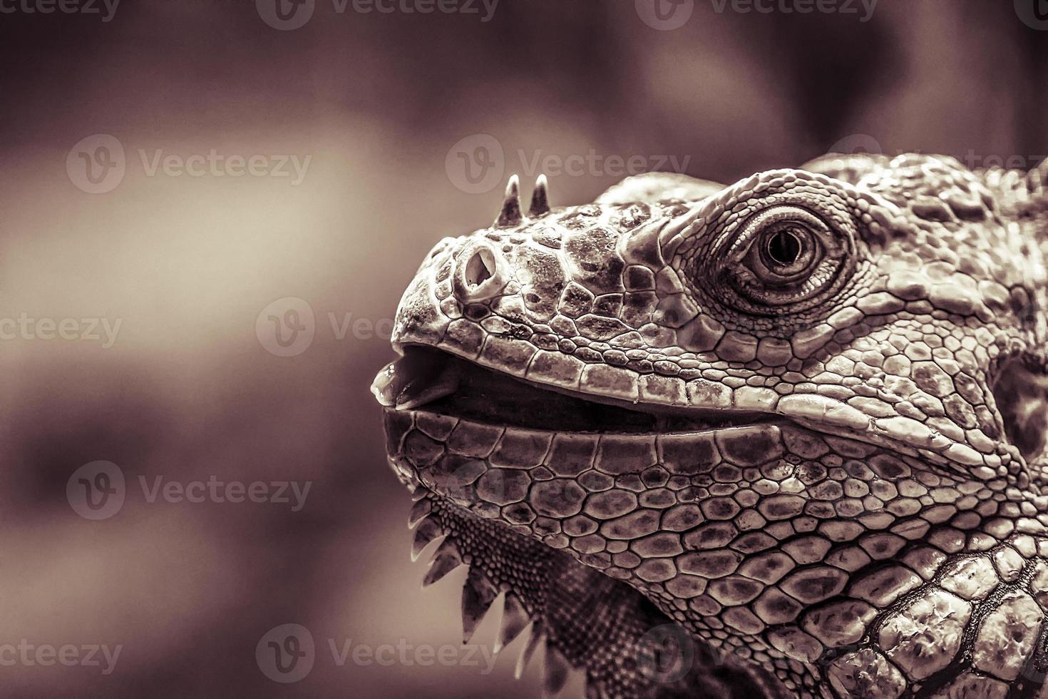 primo piano del ritratto di leguan, filtro colorato d'annata foto