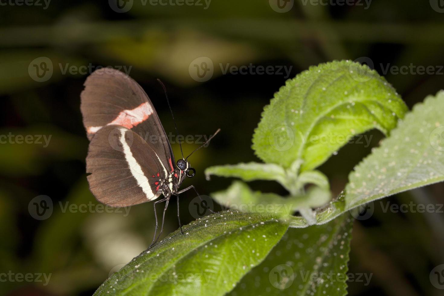 farfalla sulla foglia foto
