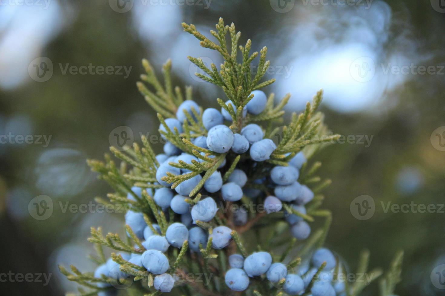 piccolo pallet di frutta blu foto