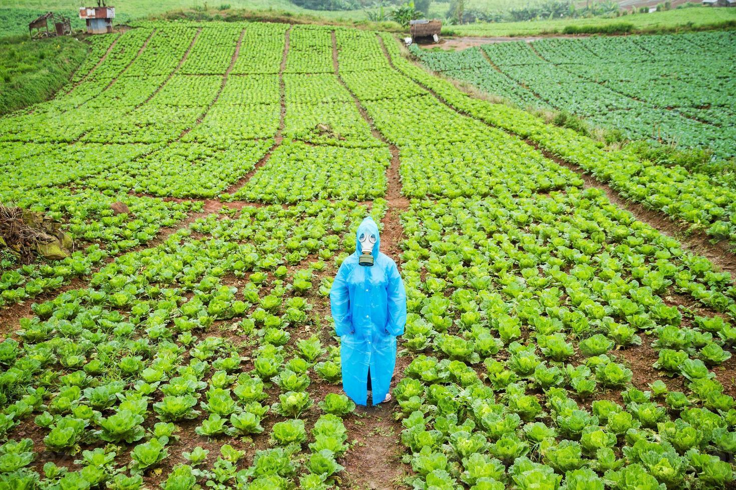 fattoria di lattuga in una giornata piovosa. foto