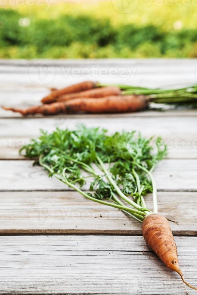carote fresche biologiche sul tavolo di legno foto