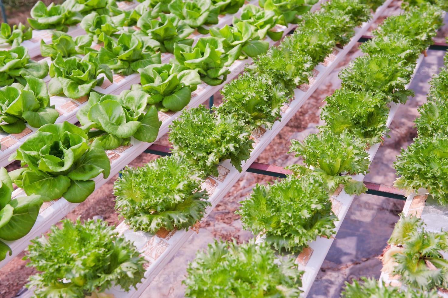 verdura idroponica foto