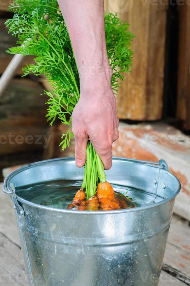 lavando il mazzo di carote foto