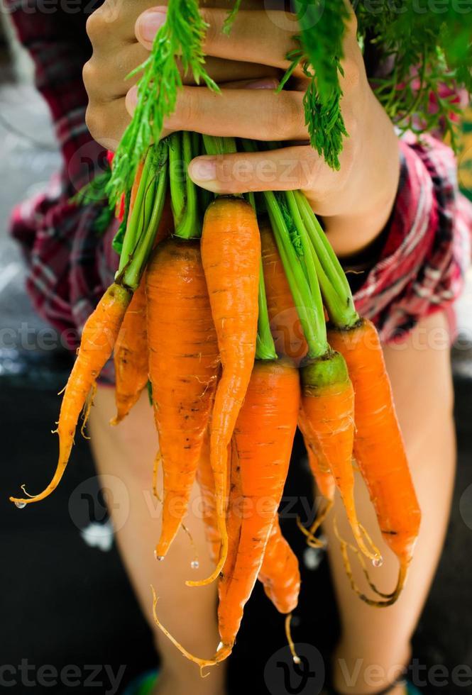 mani che tengono carote fresche crude foto