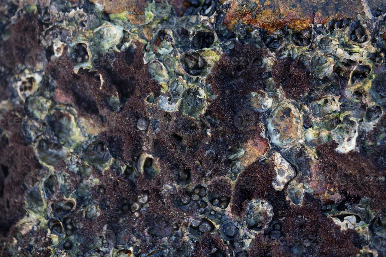 lumache e patelle di roccia foto