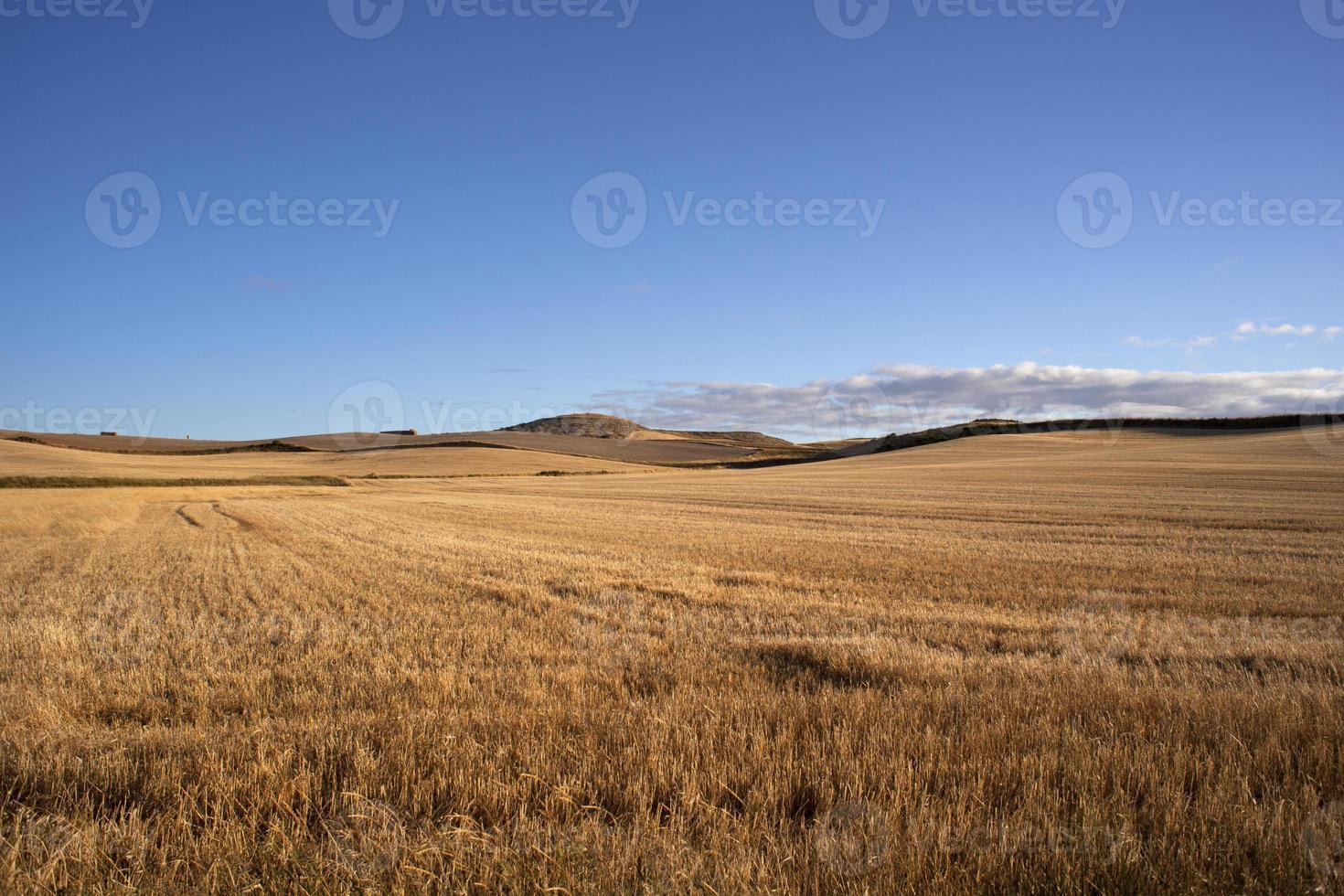 campagna spagnola foto