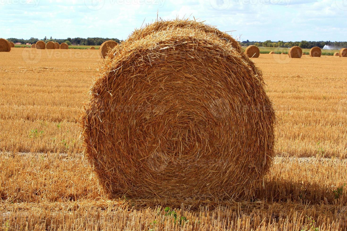 agricoltura foto