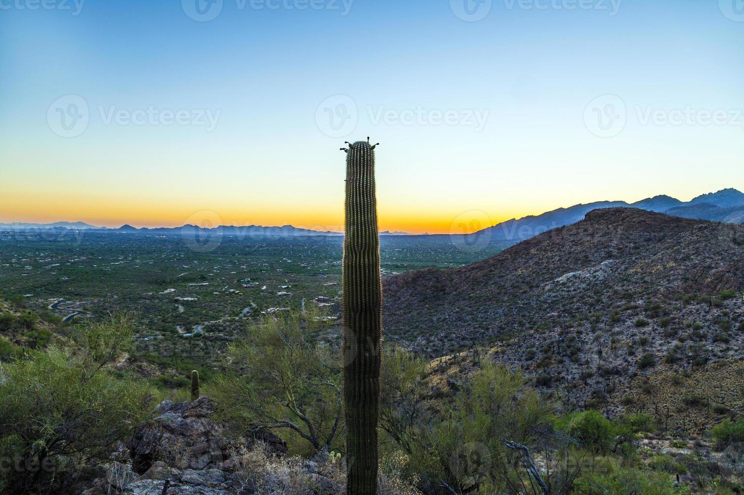 tramonto con bellissimi cactus verdi nel paesaggio foto