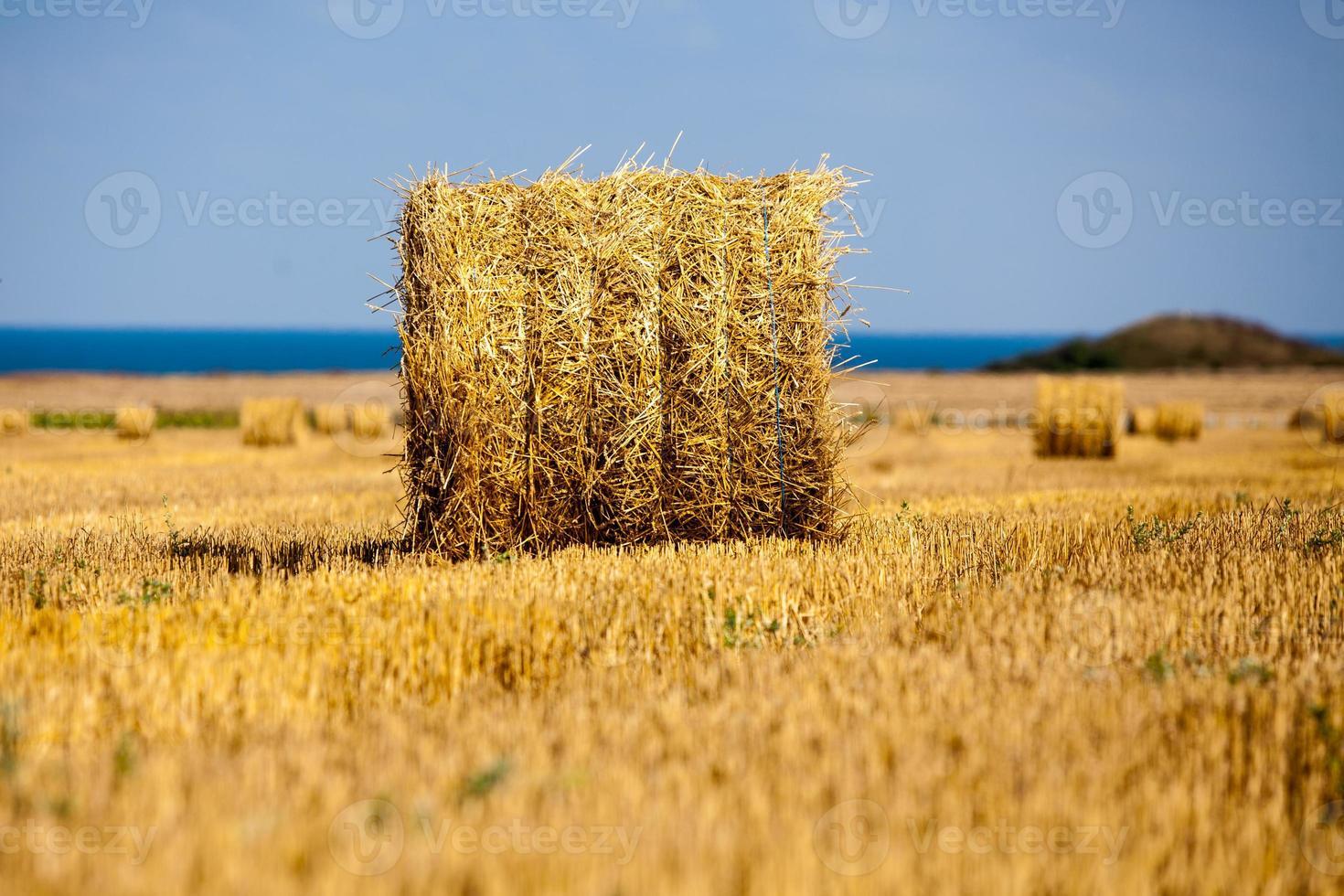 raccolto campo di grano collinare con balle di paglia foto