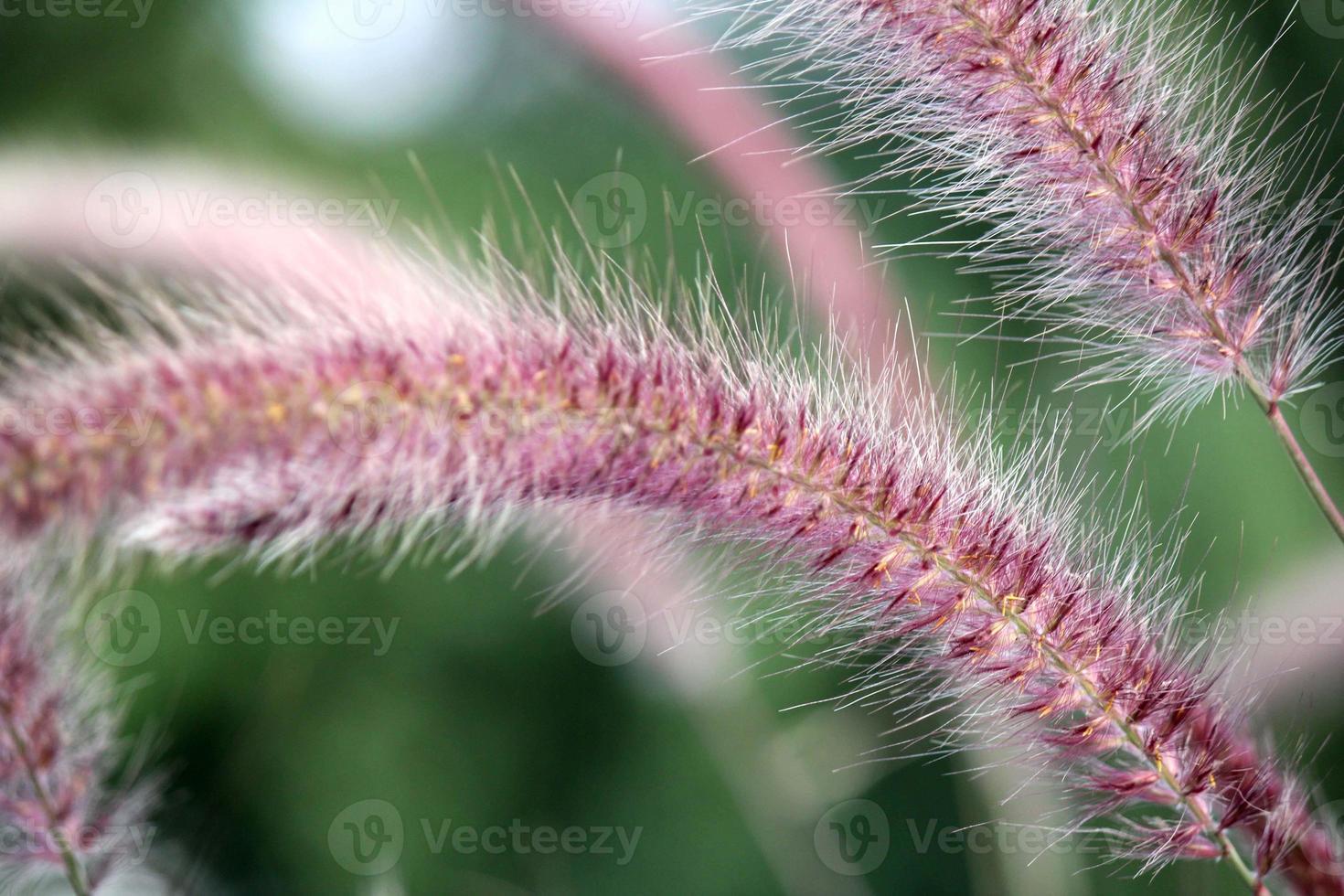 fiori di erba foto
