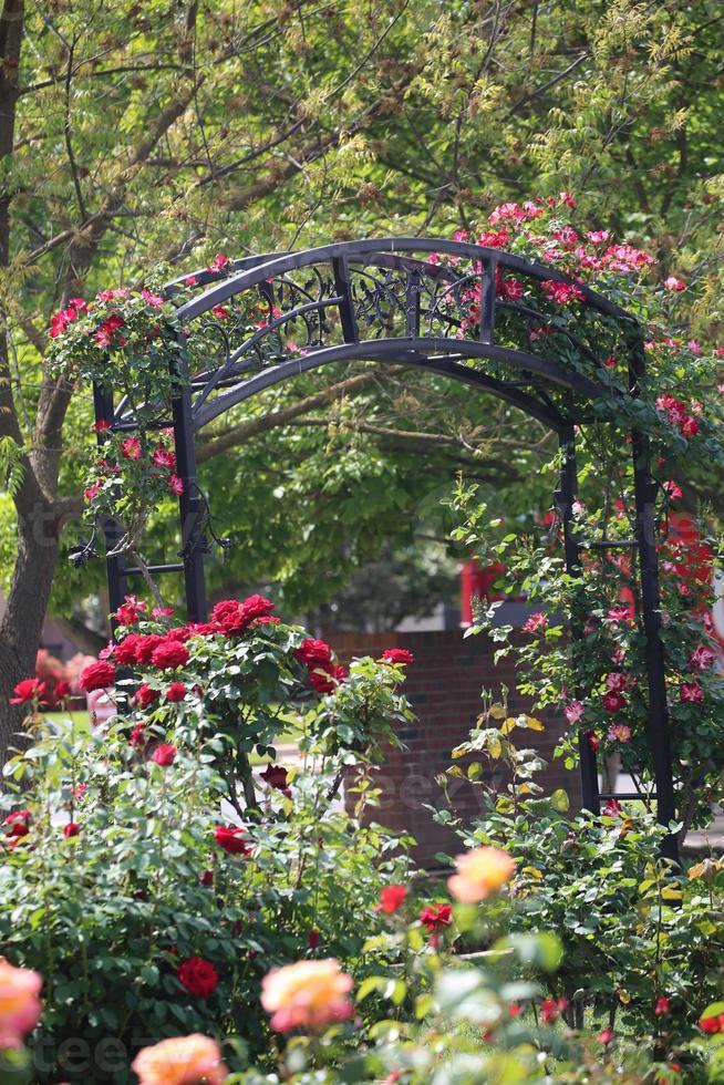 arco di fiori foto
