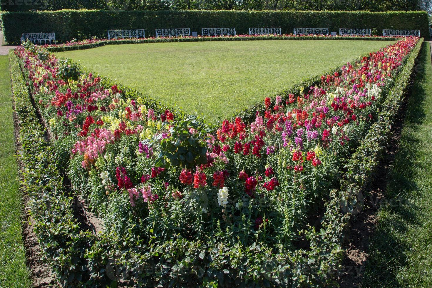 giardino formale con panchina bianca, st. Petersburg foto