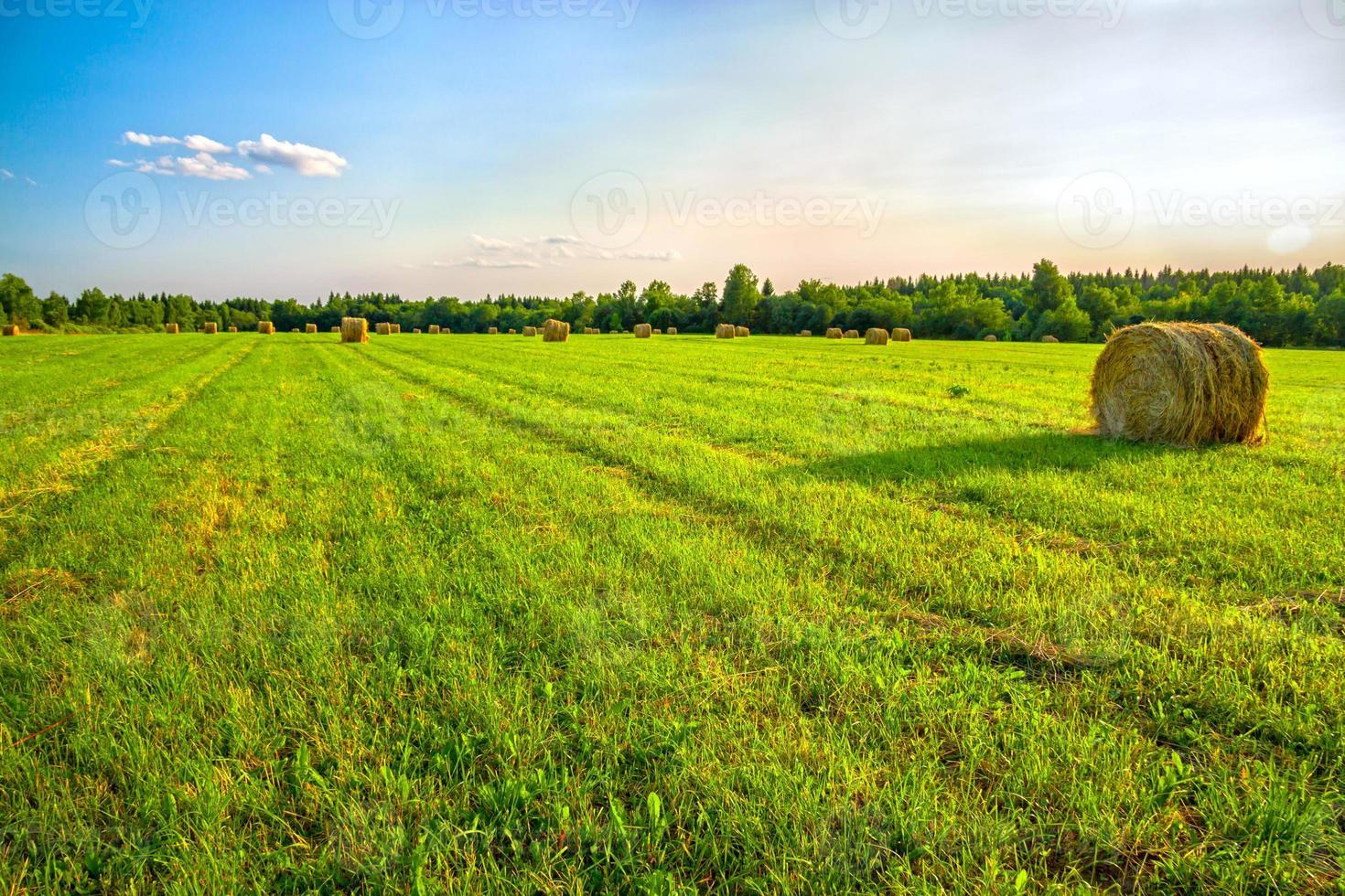 paesaggio rurale estivo foto