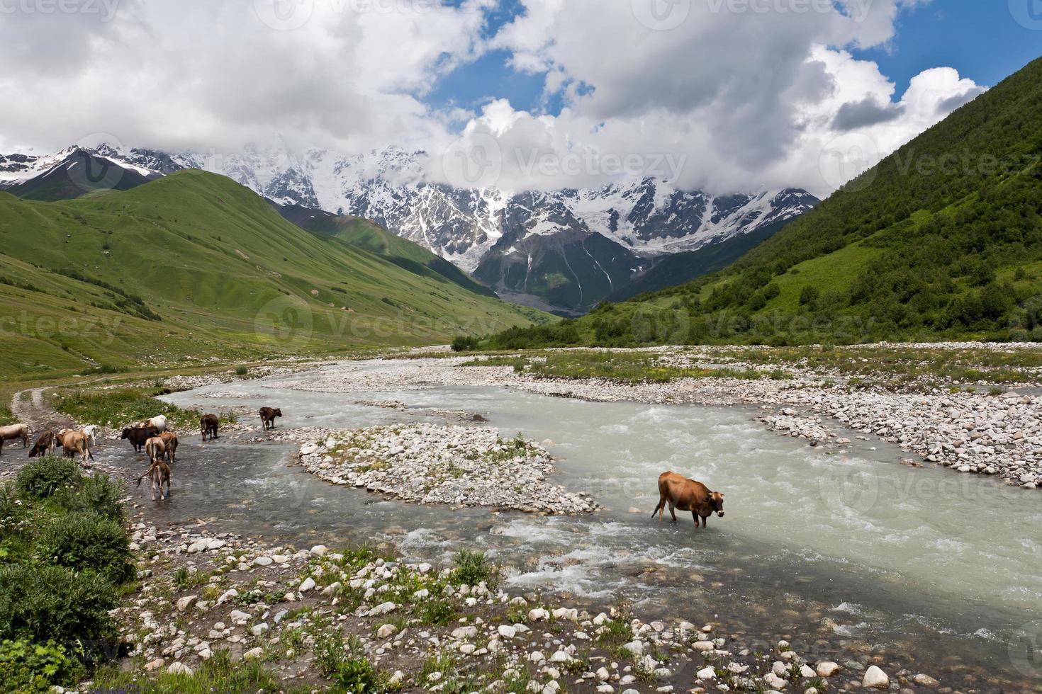 paesaggio montano con mucche. foto