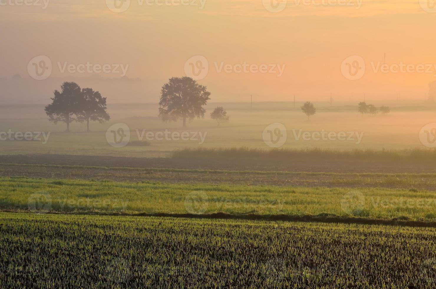paesaggio di campagna al mattino presto. foto