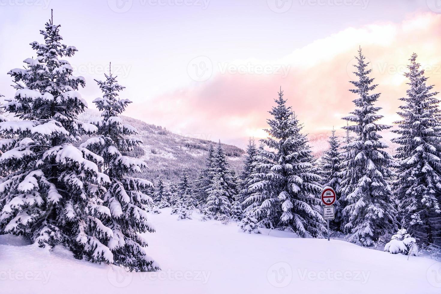 bellissimo paesaggio forestale invernale foto