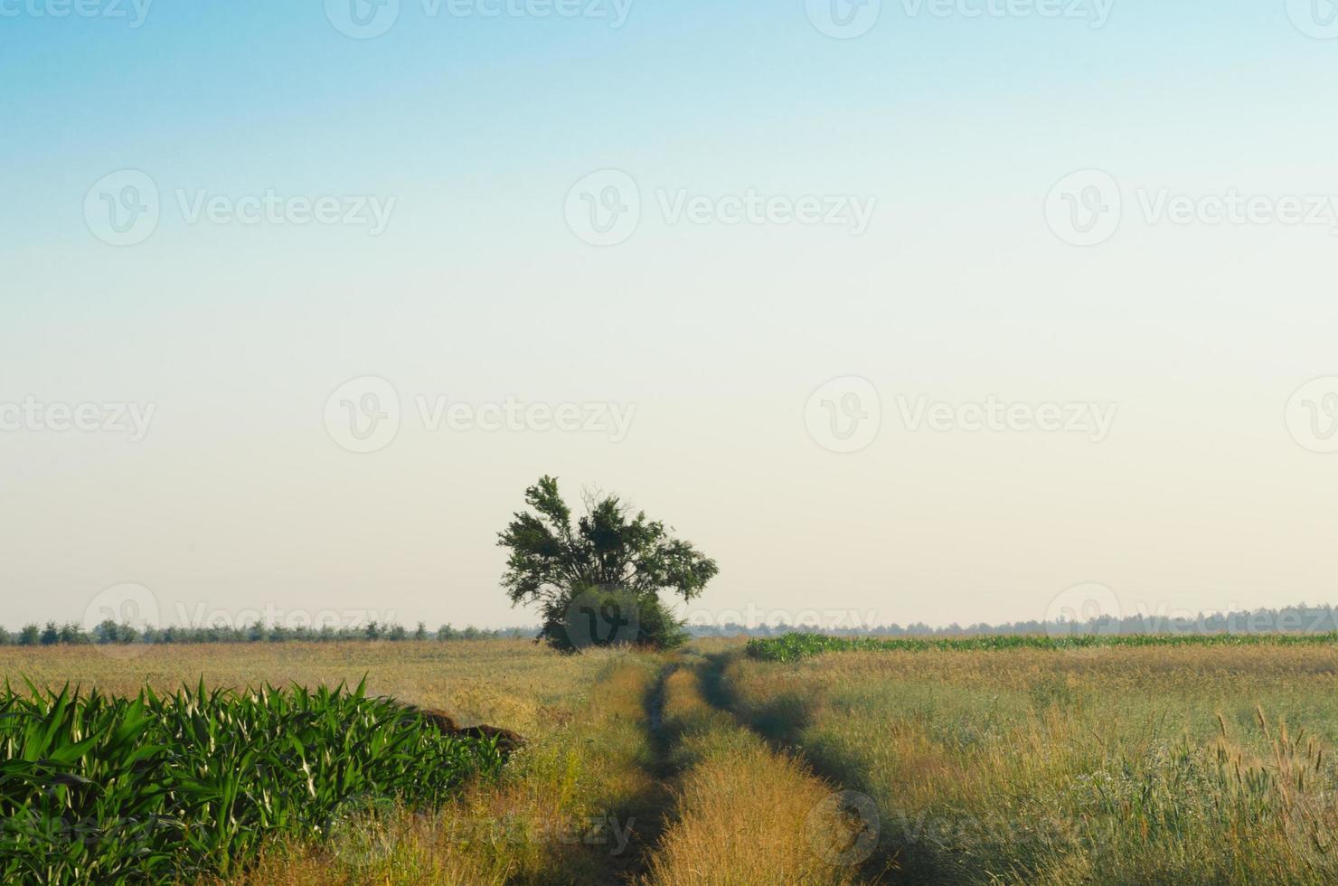 paesaggio con strada di campagna in estate foto