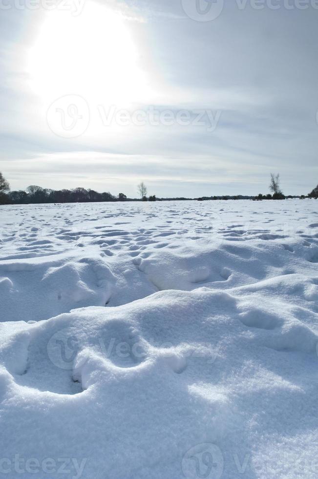 inverno nella nuova foresta foto