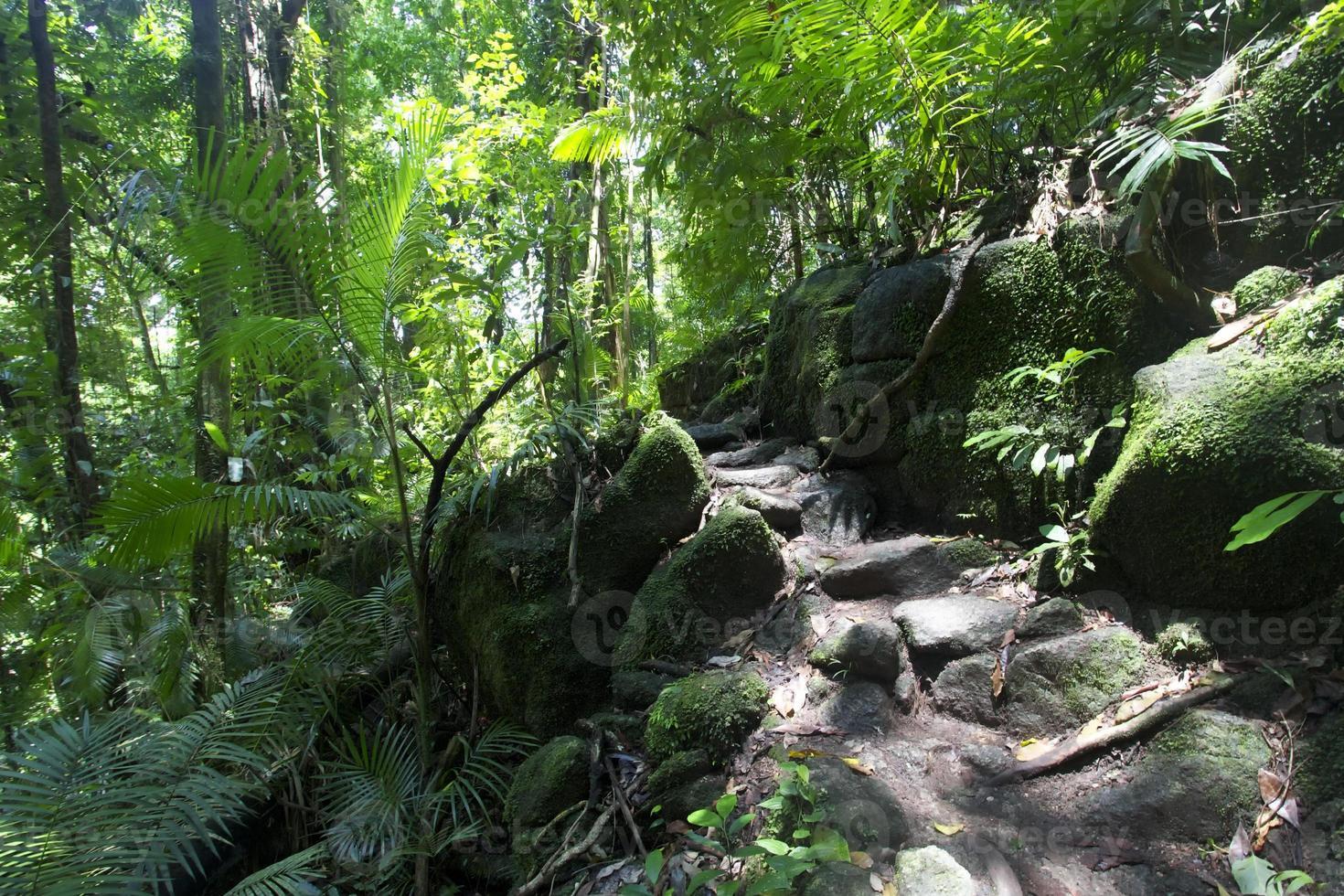 foresta pluviale al parco nazionale di daintree della gola del muschio foto