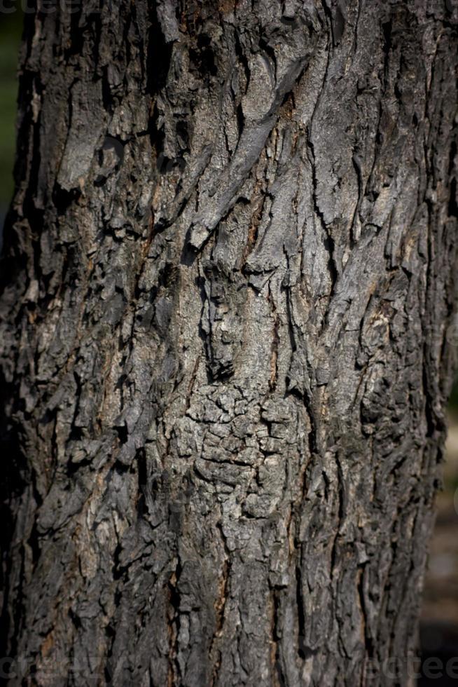 corteccia d'albero alla luce del sole foto