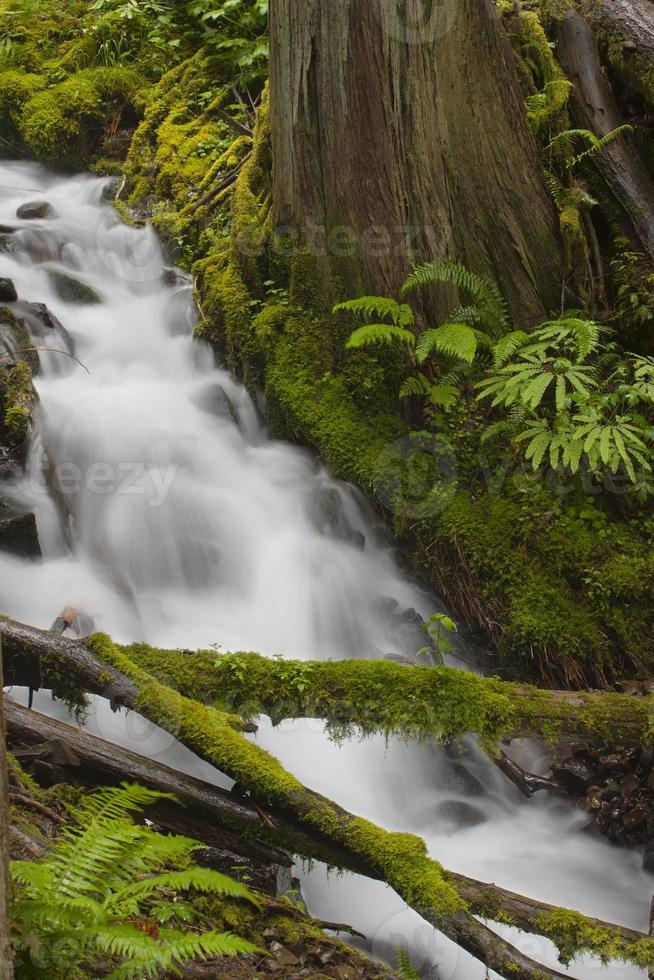 estratto della foresta pluviale foto