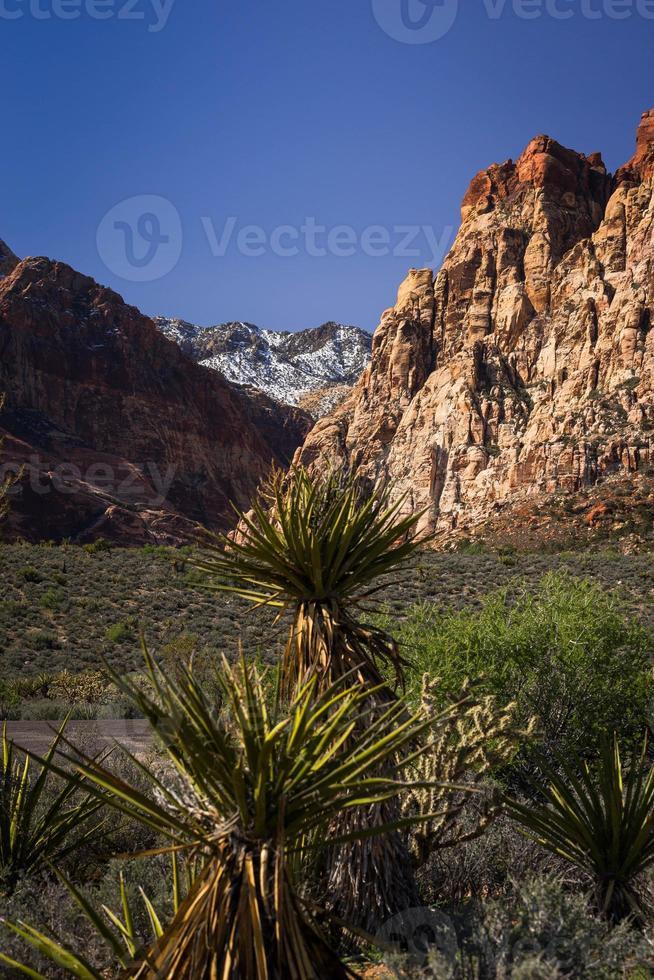montagne della zona di conservazione del canyon di roccia rossa 2 foto