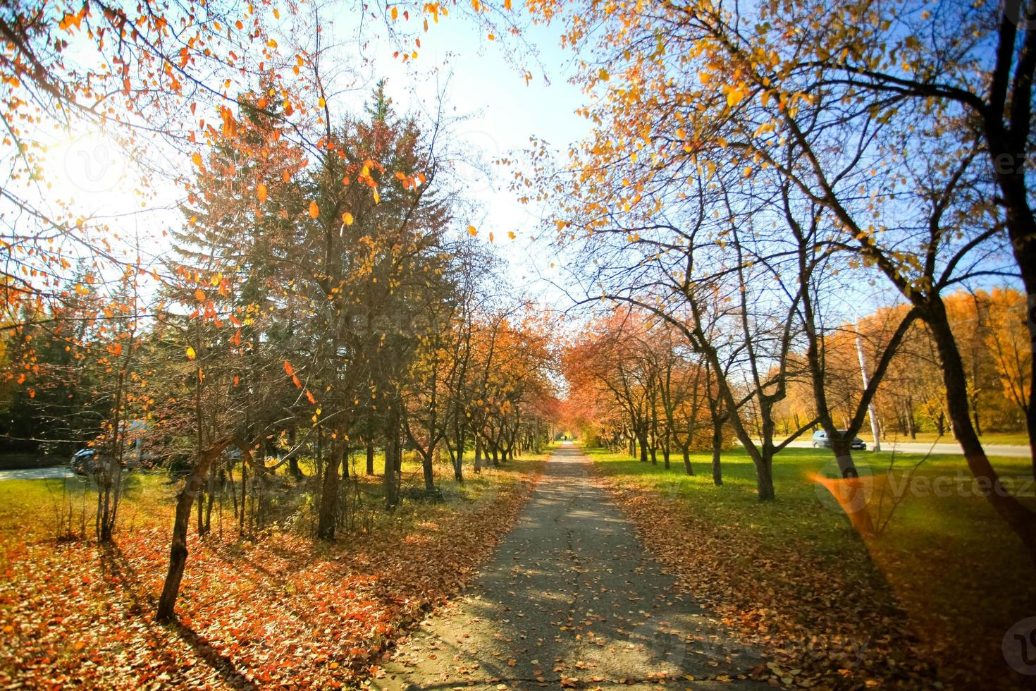paesaggio autunnale con strada e bellissimi alberi colorati foto