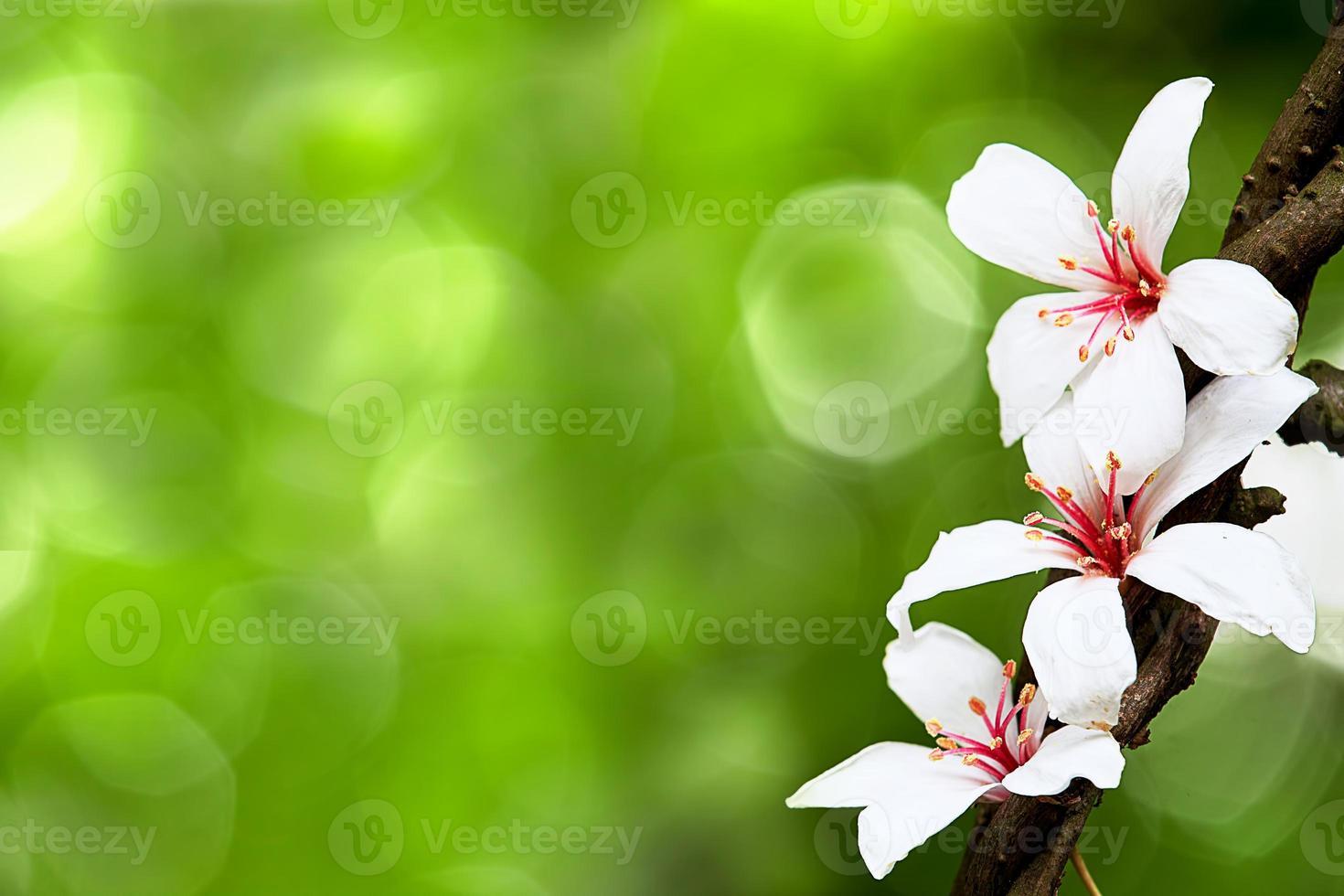 bellissimi fiori tung foto