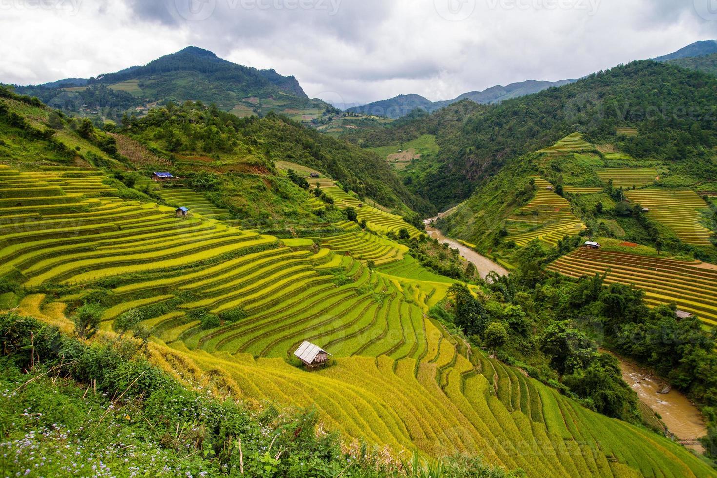 terrazze di riso in vietnam foto