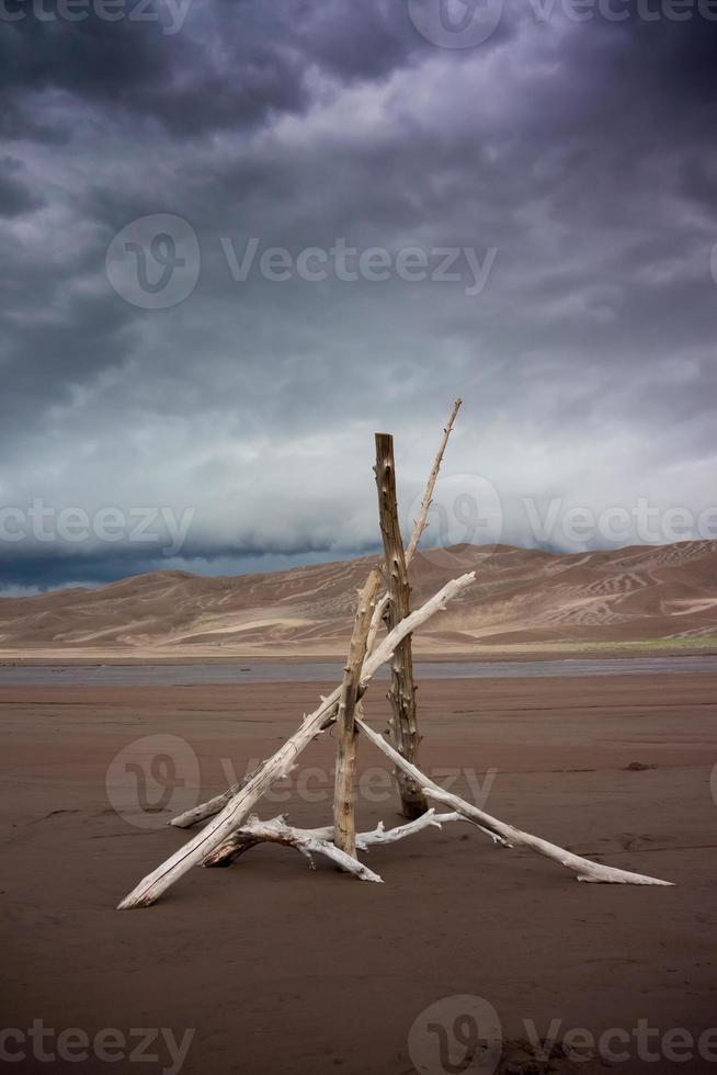 catasta di legna del deserto foto