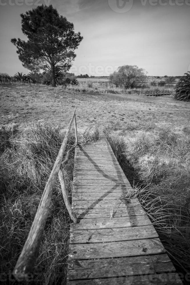 Puentes foto