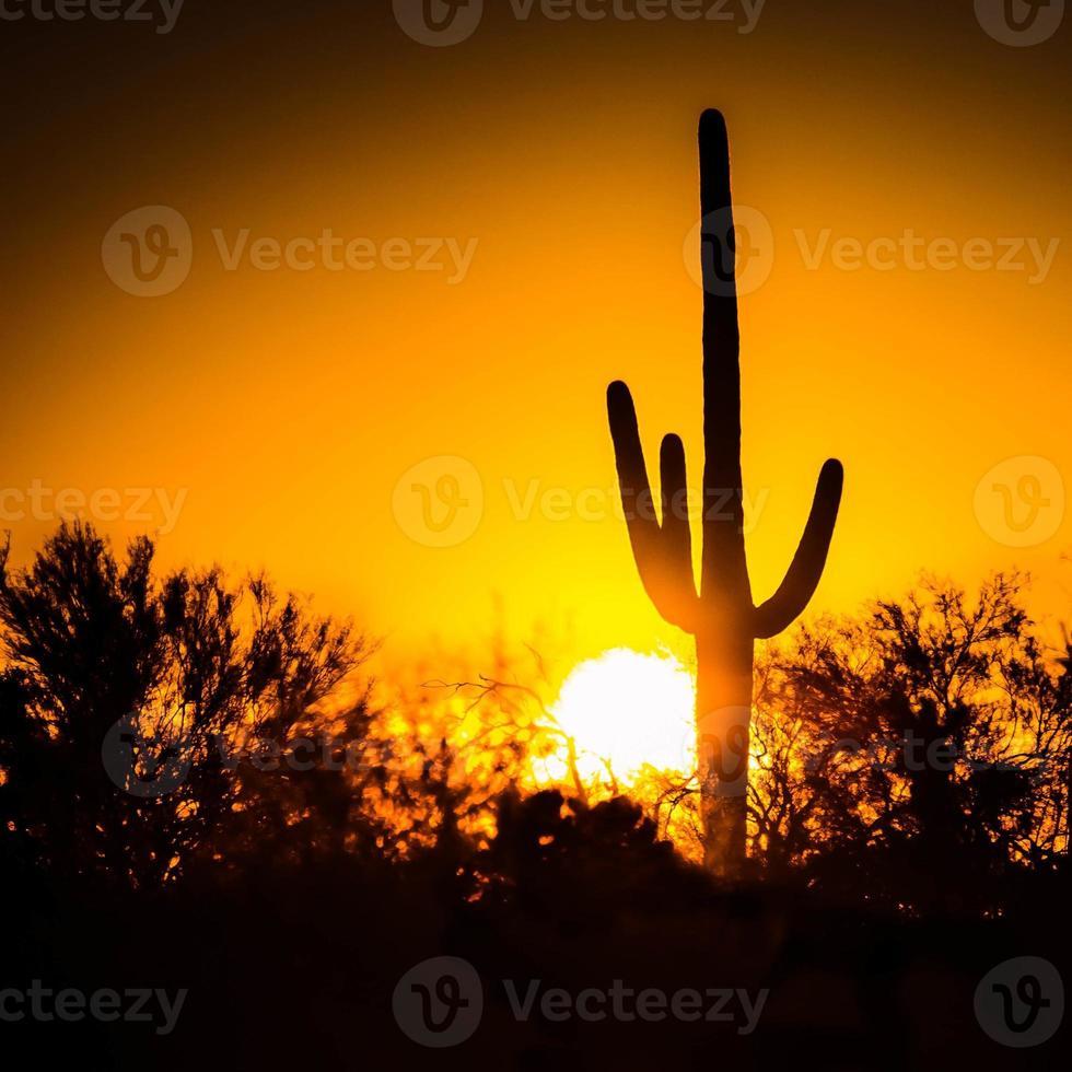 Saguaro Sunset foto