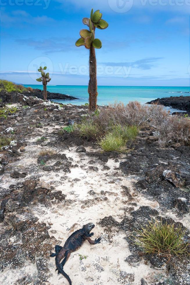 vista sul mare delle Galapagos foto