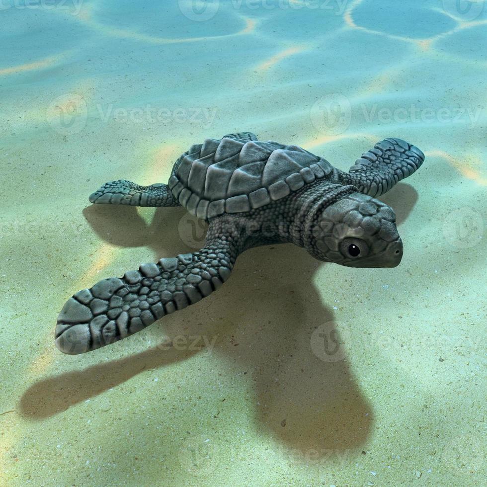 Tartaruga di mare 3D bambino foto