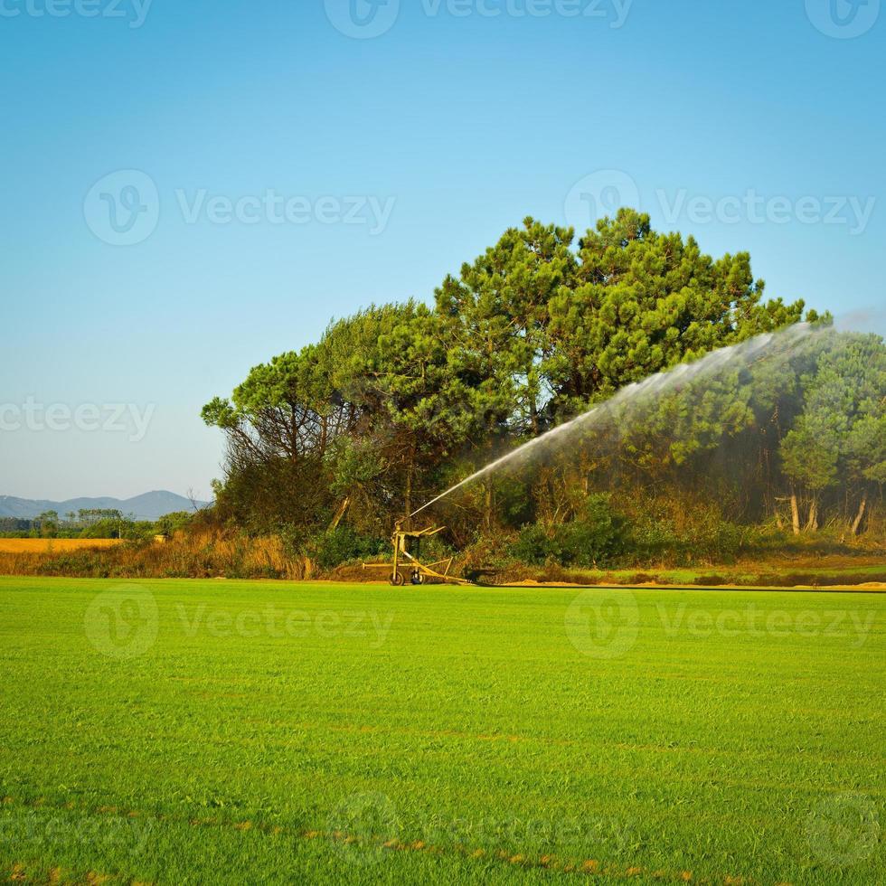 irrigazione foto