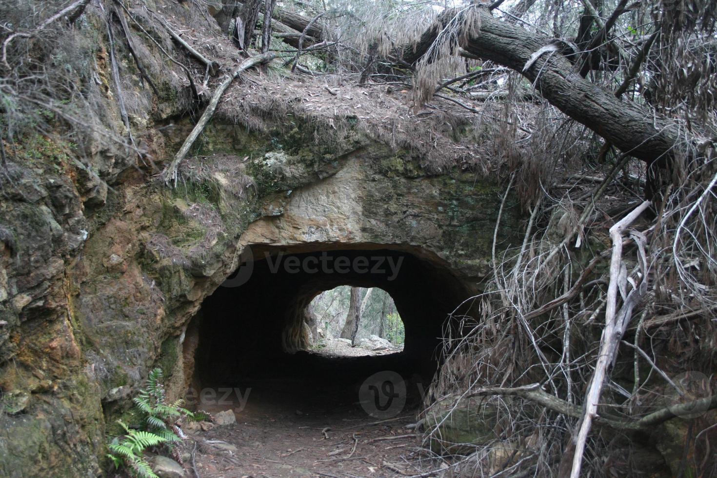 tunnel di coke nella foresta foto